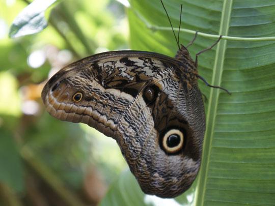 Butterfly House Machu Picchu   Best of Peru Travel